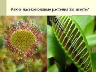 Какие насекомоядные растения вы знаете?
