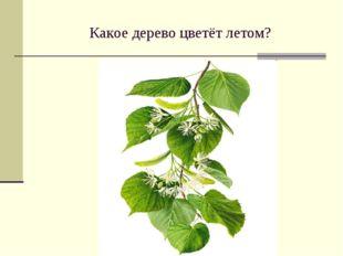 Какое дерево цветёт летом?