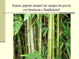 Какое дерево может по скорости роста состязаться с бамбуком?