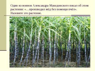 Один из воинов Александра Македонского писал об этом растении: «…производил м
