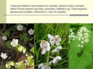 Среди растений, встречающихся в ельнике, немало таких, которые имеют белые цв