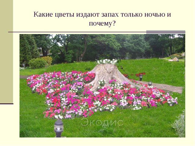 Какие цветы издают запах только ночью и почему?
