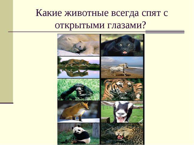 Какие животные всегда спят с открытыми глазами?