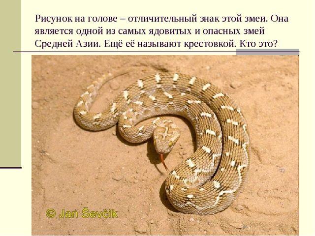 Рисунок на голове – отличительный знак этой змеи. Она является одной из самых...