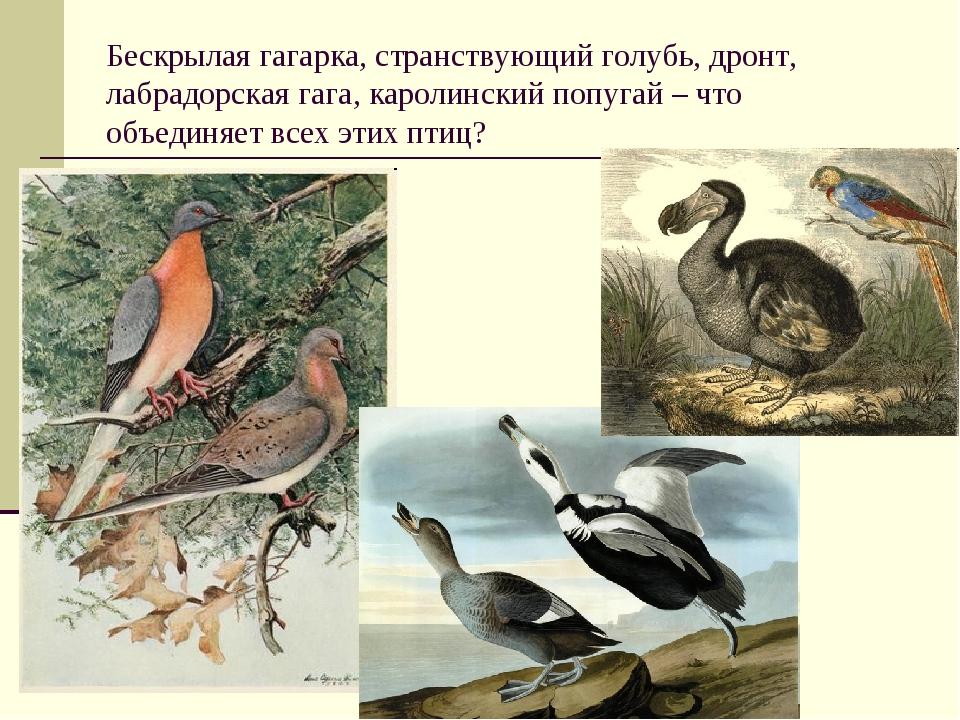 Бескрылая гагарка, странствующий голубь, дронт, лабрадорская гага, каролински...