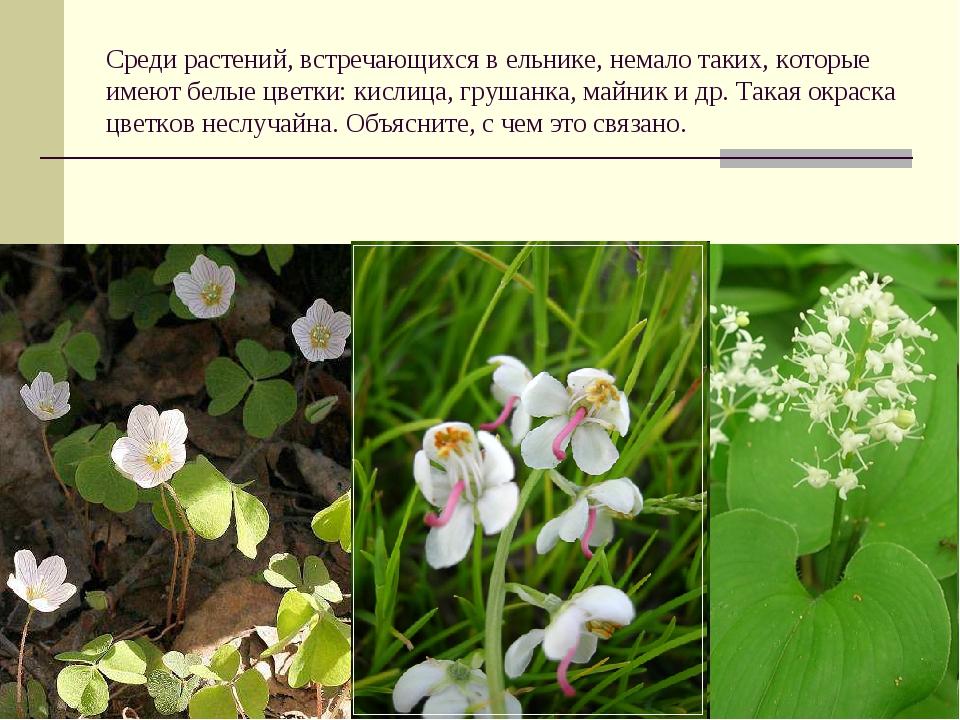 Среди растений, встречающихся в ельнике, немало таких, которые имеют белые цв...
