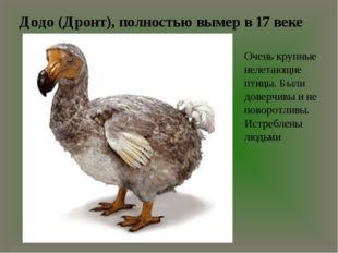 Додо (Дронт), полностью вымер в 17 веке Очень крупные нелетающие птицы. Были