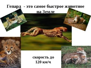 Гепард - это самое быстрое животное на Земле скорость до 120 км/ч.