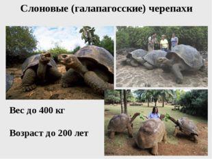Слоновые (галапагосские) черепахи Вес до 400 кг Возраст до 200 лет