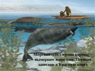 Морская (стеллерова корова) – вымершее животное. Первым занесено в Красную кн