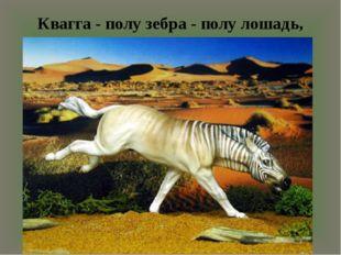 Квагга - полу зебра - полу лошадь, вымершая в 1883 году