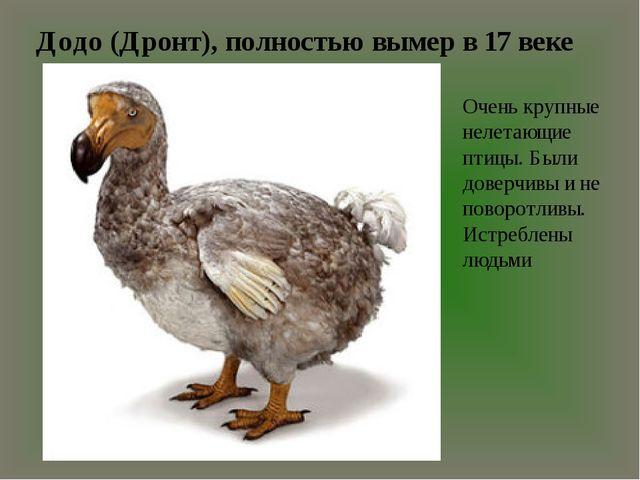 Додо (Дронт), полностью вымер в 17 веке Очень крупные нелетающие птицы. Были...