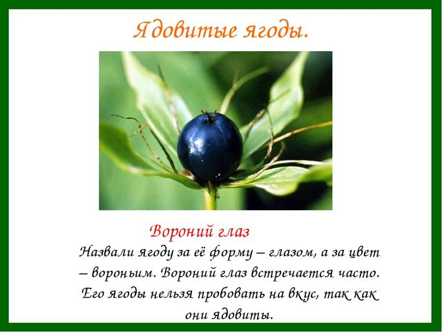 Ядовитые ягоды. Назвали ягоду за её форму – глазом, а за цвет – вороньим. Вор...