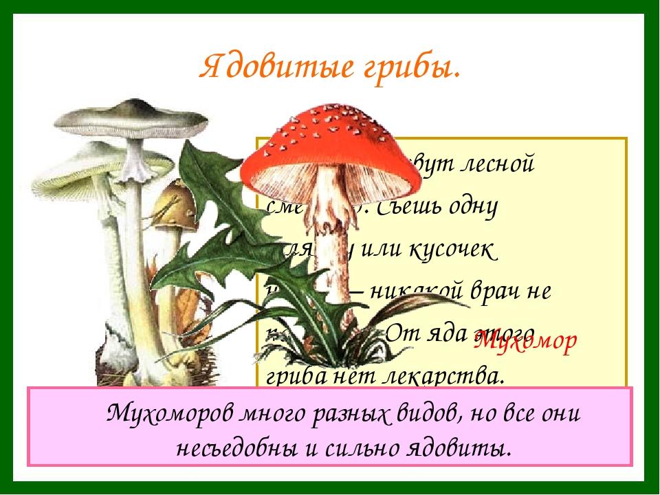 Ядовитые грибы. Этот гриб зовут лесной смертью. Съешь одну шляпку или кусочек...