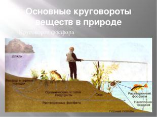 Основные круговороты веществ в природе Круговорот фосфора