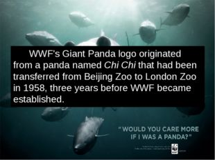 WWF's Giant Panda logo originated from a panda named Chi Chi that had been t