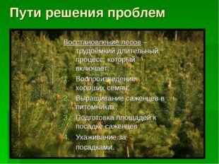 Пути решения проблем Восстановление лесов – трудоёмкий длительный процесс, к