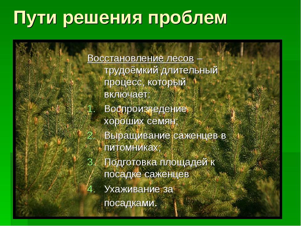 Пути решения проблем Восстановление лесов – трудоёмкий длительный процесс, к...