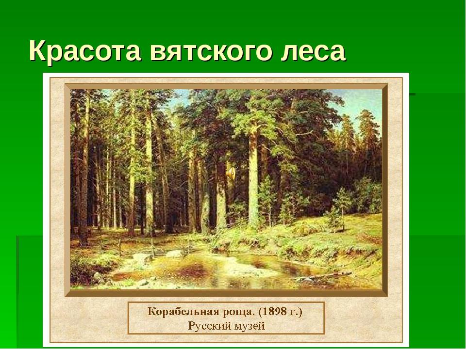 Красота вятского леса