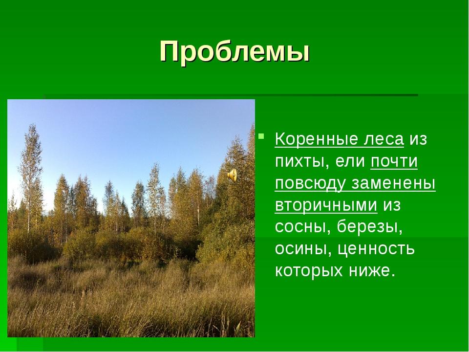 Проблемы Коренные леса из пихты, ели почти повсюду заменены вторичными из сос...
