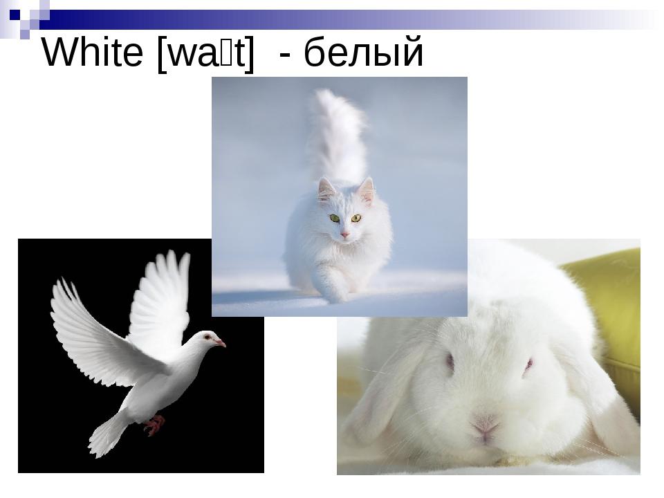 White [waɪt] - белый