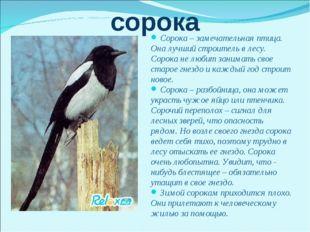 сорока Сорока – замечательная птица. Она лучший строитель в лесу. Сорока не л