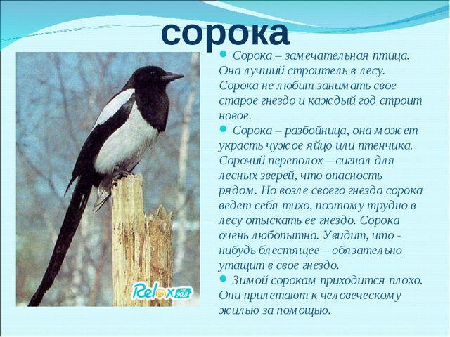 сорока Сорока – замечательная птица. Она лучший строитель в лесу. Сорока не л...