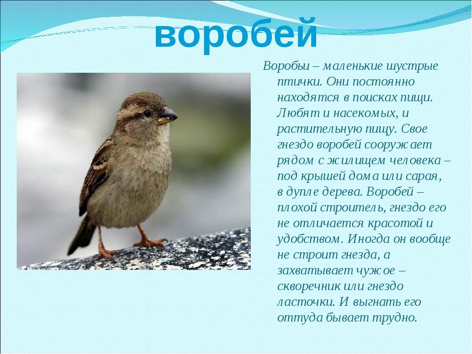 воробей Воробьи – маленькие шустрые птички. Они постоянно находятся в поисках...