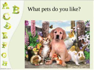 What pets do you like?