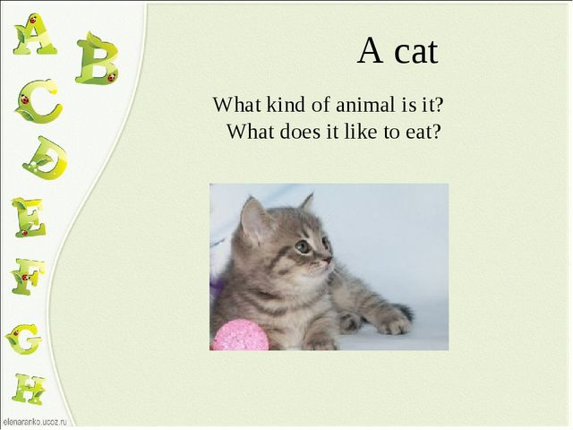 A cat What kind of animal is it? What does it like to eat?