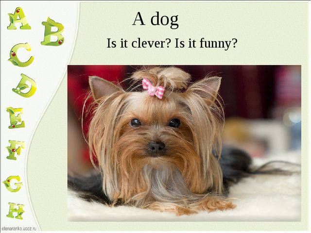 A dog Is it clever? Is it funny?