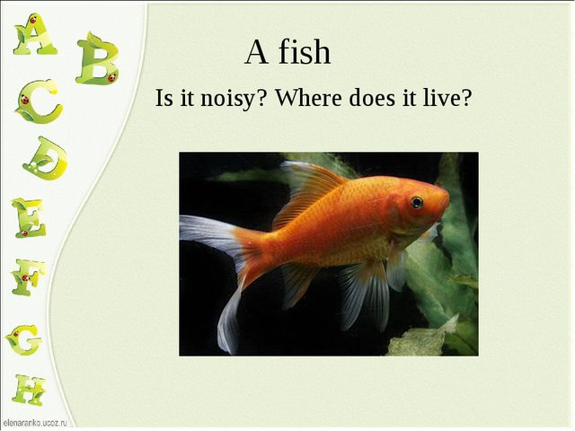 A fish Is it noisy? Where does it live?