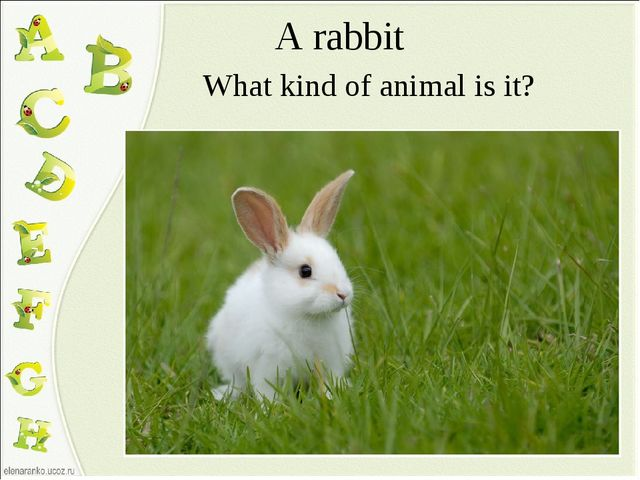 A rabbit What kind of animal is it?