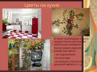 Цветы на кухне В кухне необходимо отдать предпочтение растениям небольших раз