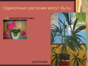 Одиночные растения могут быть: -миниатюрными -крупными