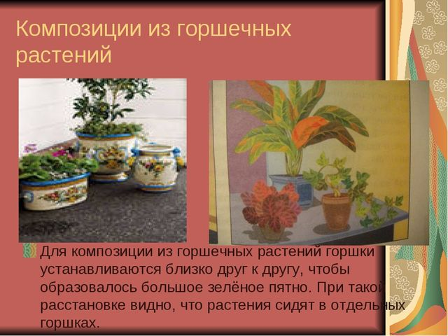 Композиции из горшечных растений Для композиции из горшечных растений горшки...