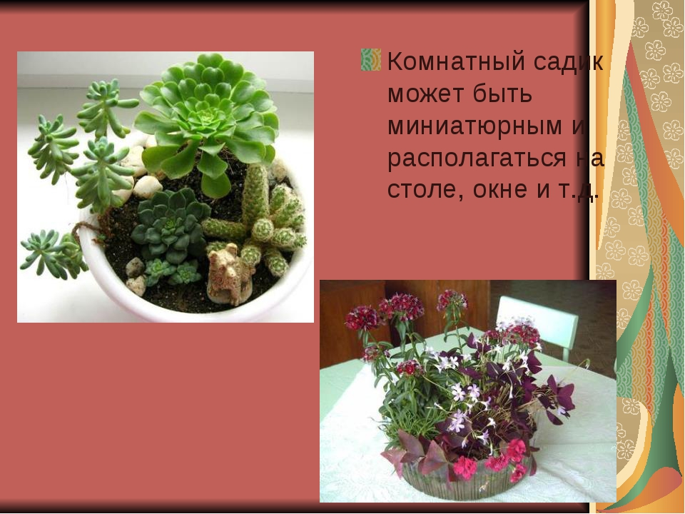 Комнатный садик может быть миниатюрным и располагаться на столе, окне и т.д.