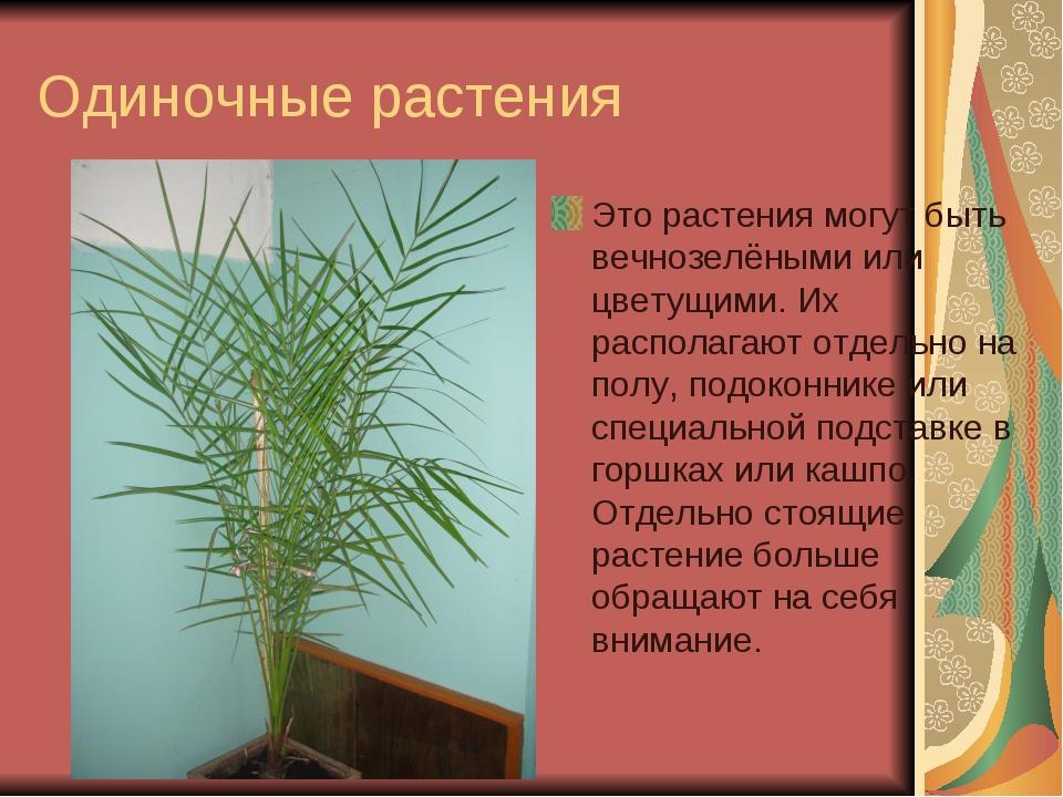 Одиночные растения Это растения могут быть вечнозелёными или цветущими. Их ра...