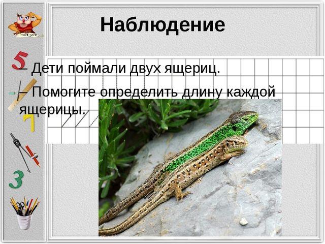 Наблюдение – Дети поймали двух ящериц. – Помогите определить длину каждой яще...