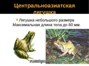 9 вопрос Обыкновенная жаба, озерная лягушка относится к отряду?