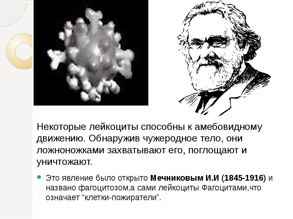 Некоторые лейкоциты способны к амебовидному движению. Обнаружив чужеродное те...