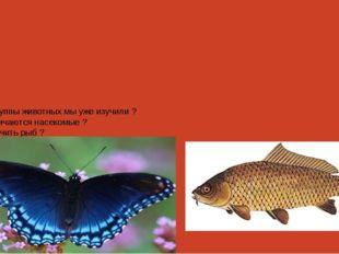 Какие группы животных мы уже изучили ? Чем отличаются насекомые ? Как отличит