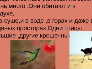 Птицы -животные ,которых на земле очень много .Они обитают и в воздухе, и на
