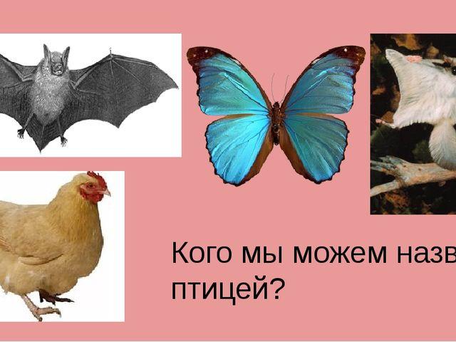 Кого мы можем назвать птицей?
