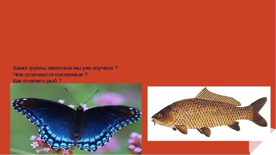 Какие группы животных мы уже изучили ? Чем отличаются насекомые ? Как отличит...