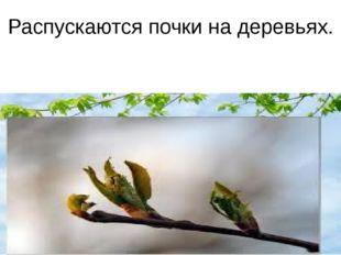 Распускаются почки на деревьях.