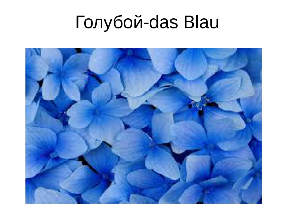 Голубой-das Blau