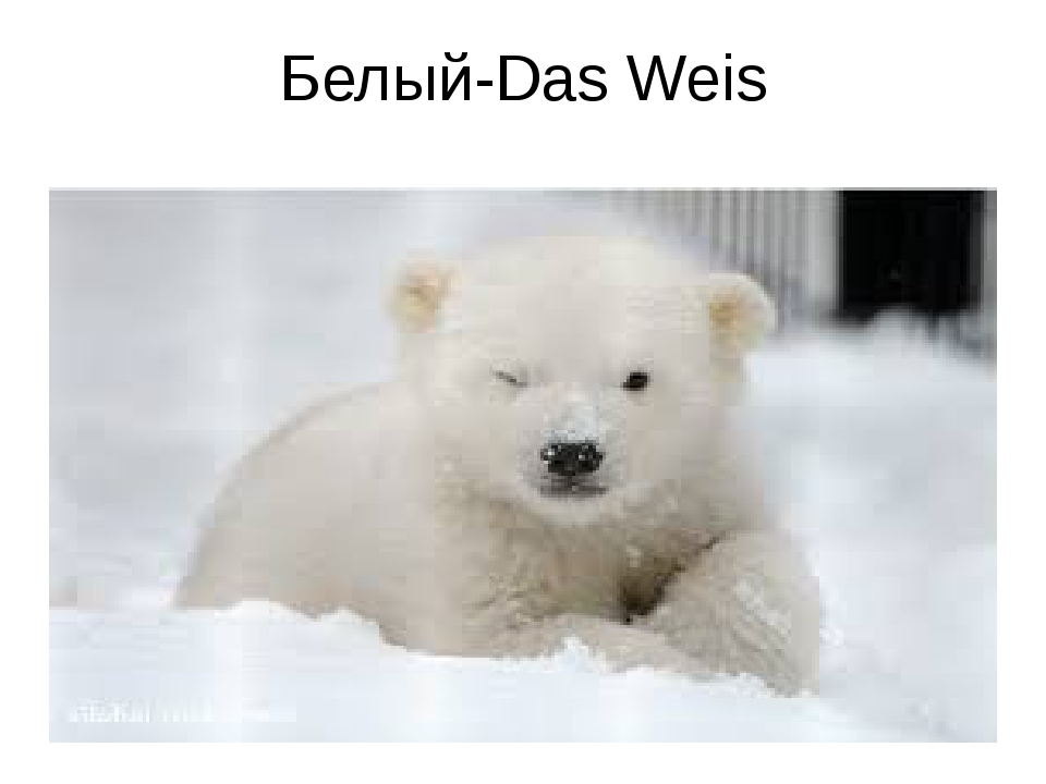Белый-Das Weis
