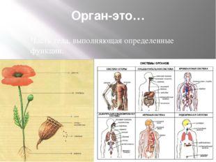 Орган-это… Часть тела, выполняющая определенные функции.