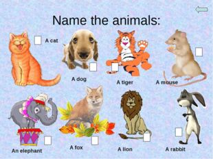 Name the animals: A cat A dog A tiger A mouse An elephant A fox A lion A rabbit